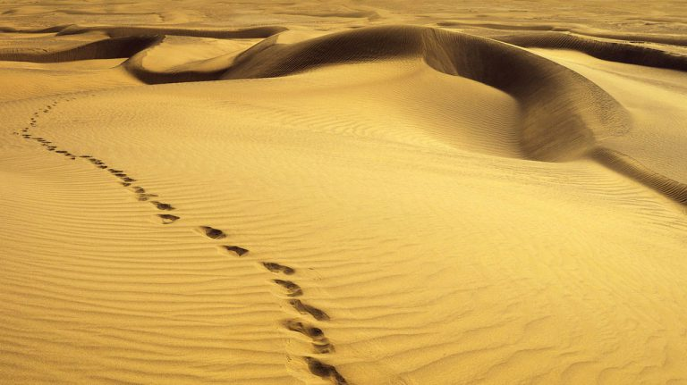 Morocco day tours - discover the sough of Morocco